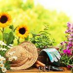 Высказывания о саде и огороде